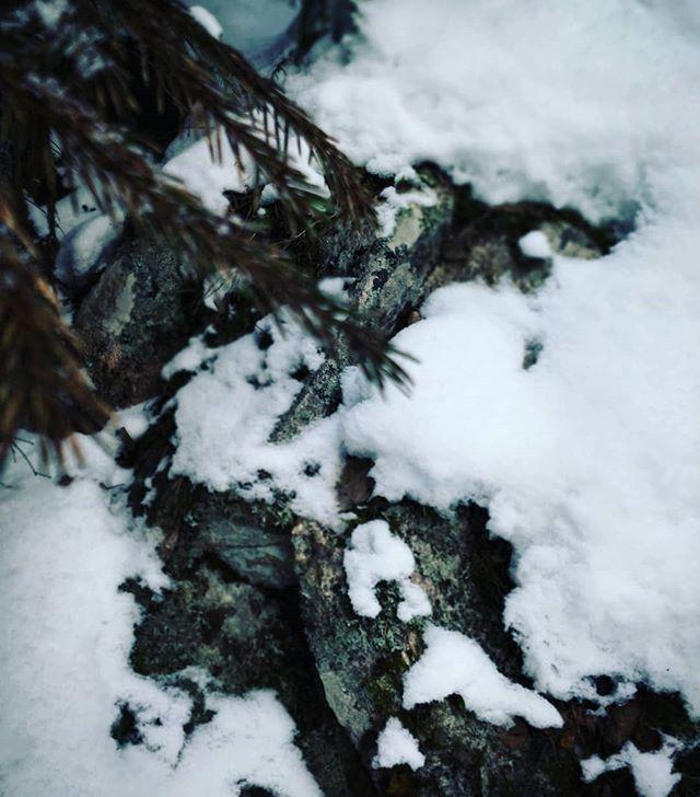 Metsästä löytyi nukkuva vuorenpeikko. #vuorenpeikko #korpelantorppa
