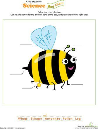 17 mejores imágenes sobre Bumblebee Unit en Pinterest   Abejas de ...
