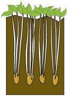 Onpeutlefaire.com - Fiche technique : la tour de pommes de terre