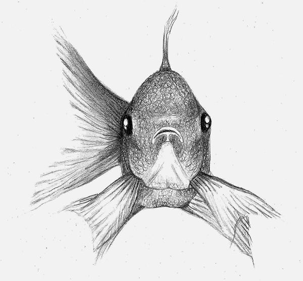 Fish Sketch. on Behance