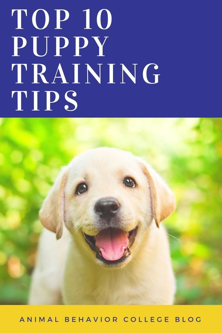 Toilet Train Your Cat The Pros Cons How To Puppy Training
