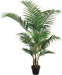Palmera china.  Puede reducir el formaldehído y benceno, compuestos orgánicos volátiles perjudiciales para la salud.