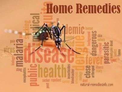 Insect bites natural remedies and treatments