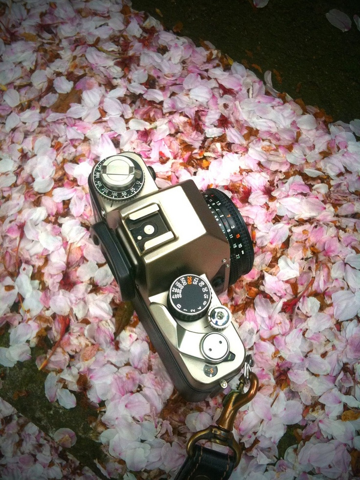 My favorite : CONTAX S2