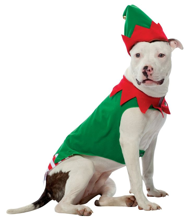 Jaeger's Christmas Costume