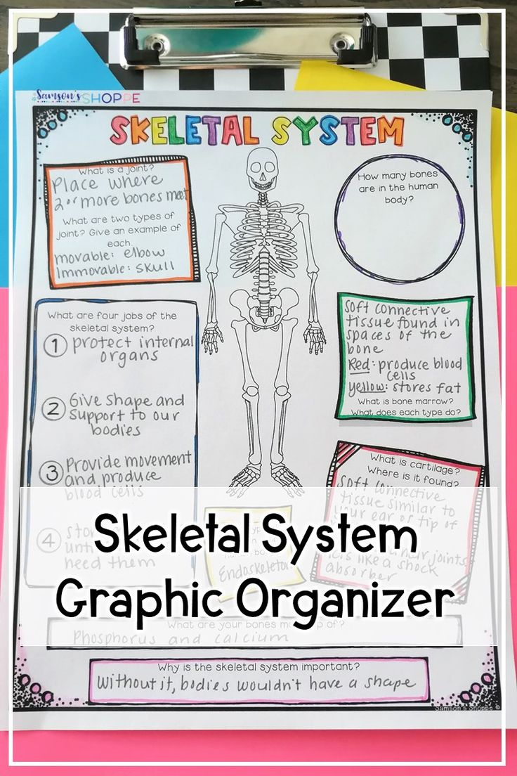 Skeletal System Activity Worksheet in 2020 (With images
