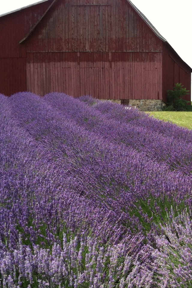 Lavender Hills Farm Mi What A Great Place To Visit I Cant Wait Go Back This Spring Summer Garden Pinterest Places And Michigan