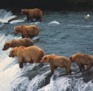 """So then he said, 'But mom, I don't like salmon.'""  ""He didn't!"" -- Grizzly bears on Alaska fishing trip"