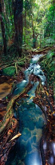 ♥ Rain forest, Queensland, Australia. By Ken Duncan