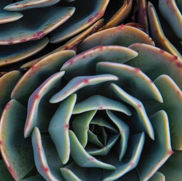 textura . #nature #naturetexture #naturephotography #naturelovers #leaf #texture #texturephotography #green #greenphoto #life #natureart #artinnature
