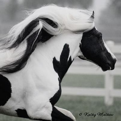 I wonder if horses know how cool they are? Just incredible animals.