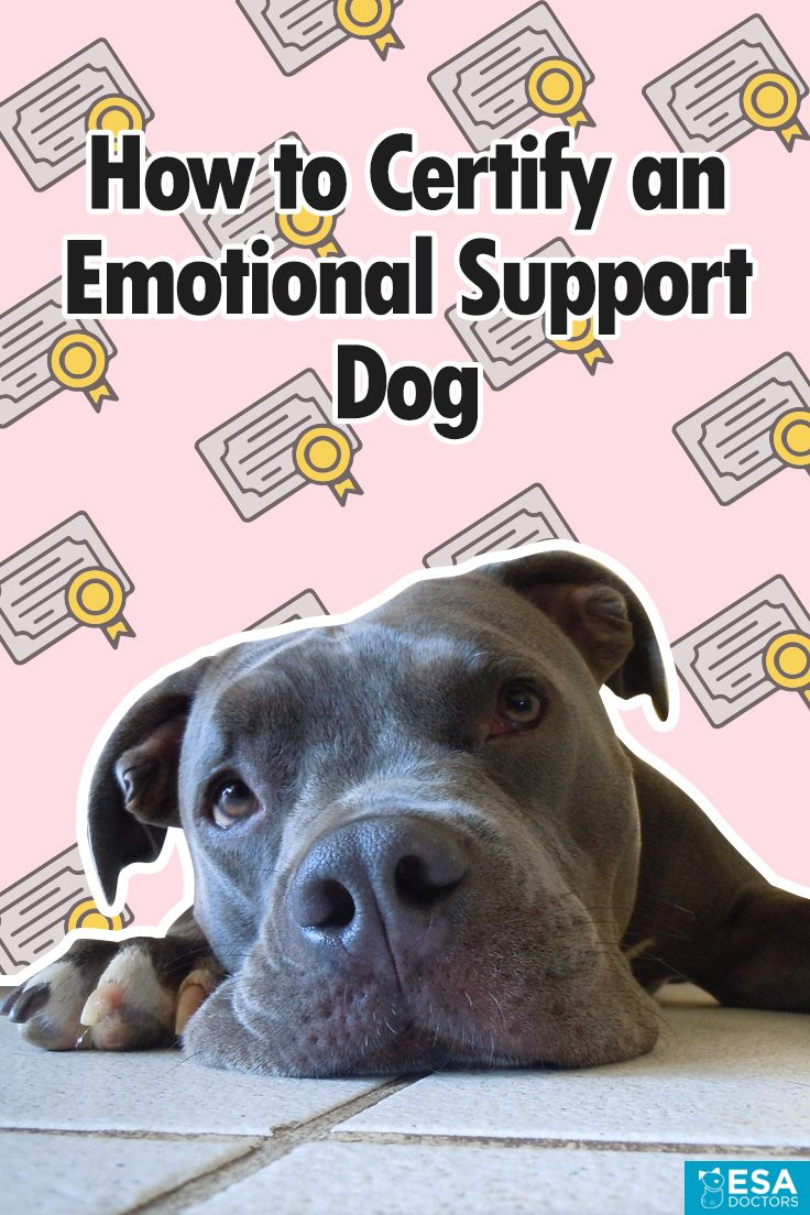 How To Certify An Emotional Support Dog Esa Doctors Support