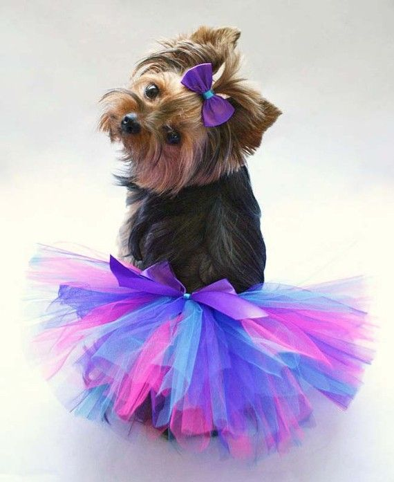 Typically I'm not a fan of dressing up dogs, BUT this is pretty darn cute!  :-) - (tutu from Diva Puppy Couture via Etsy)