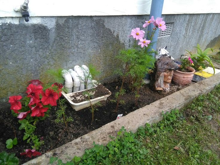 Flower patch, side of house, drain.