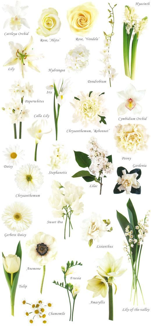 White Flowers guide (Wedding Flowers By Heidi)