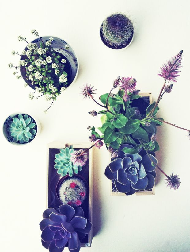 because the colors in succulents are just so darn pretty!