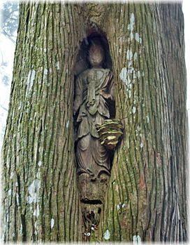 画像:如意輪寺の観音杉(観音像)