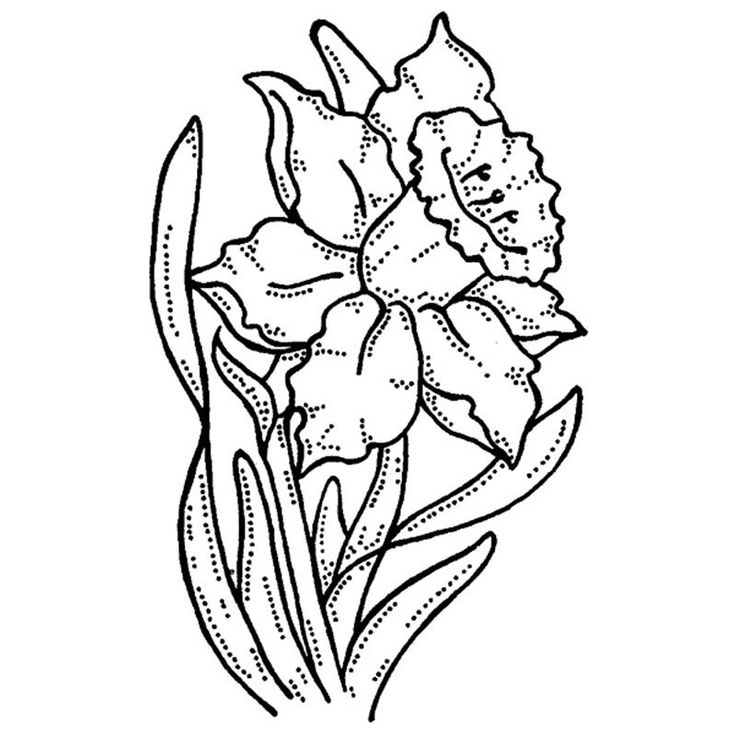 Line Drawing Daffodil : Best daffodil tattoo images on pinterest