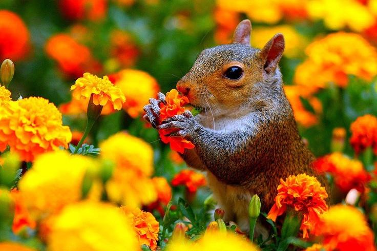 Enjoying the flowers
