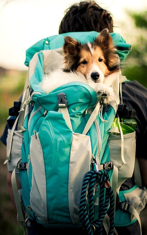 Backpacking...