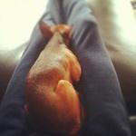 sono più comode le mie gambe del divano secondo lui