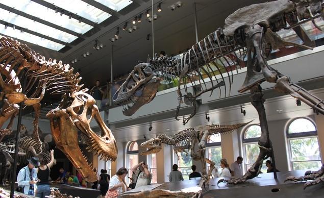 Dinosaur Hall Natural History Museum Of Los Angeles Calif