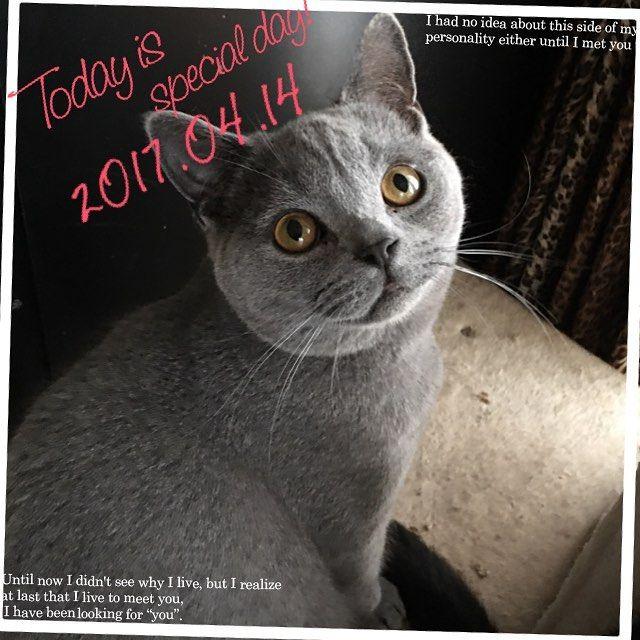 ・ ・ おはよう✨ ・ 明日はいよいよウニ子になる日👍 今日は金曜日❗️ 今週早かった😆 ・ ・ #ブリティッシュショートヘア #ブリティシュブルー #ブリショー #愛猫 #愛猫同好会 #ねこ #ねこ部 #ねこ好き #ねこすたぐらむ #関西ねこ部 #猫 #にゃんこ #多頭飼い #cat #cats #catlover #catstagram #catsofinstagram #instacat #lovelycat #cute #family #britishcat #britishblue #britishshorthair