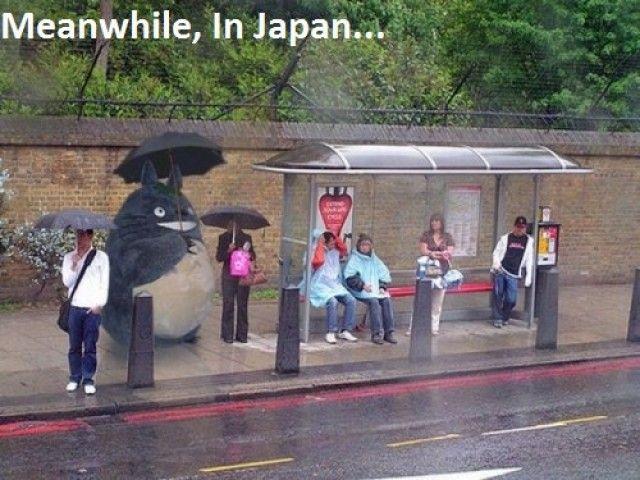 Totoro!!!!!!!: Buses, Not Them Miyazaki, Real Life, Hayaomiyaza The, Epic Win, Totoro, Studios Ghibli, Bus Stop