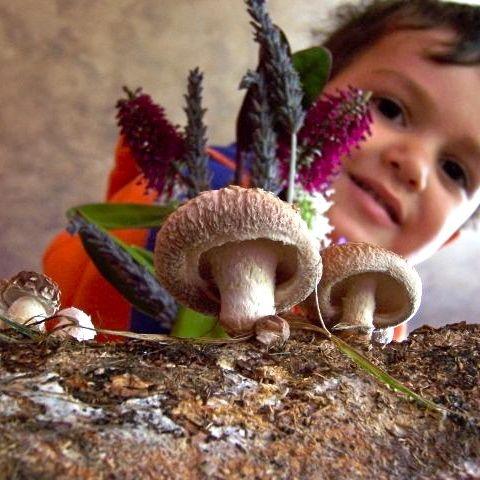 Grow shiitake mushrooms from a log.