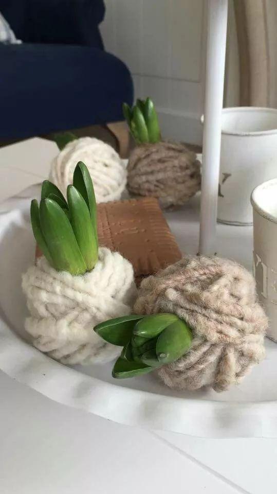 Hyacint met wol