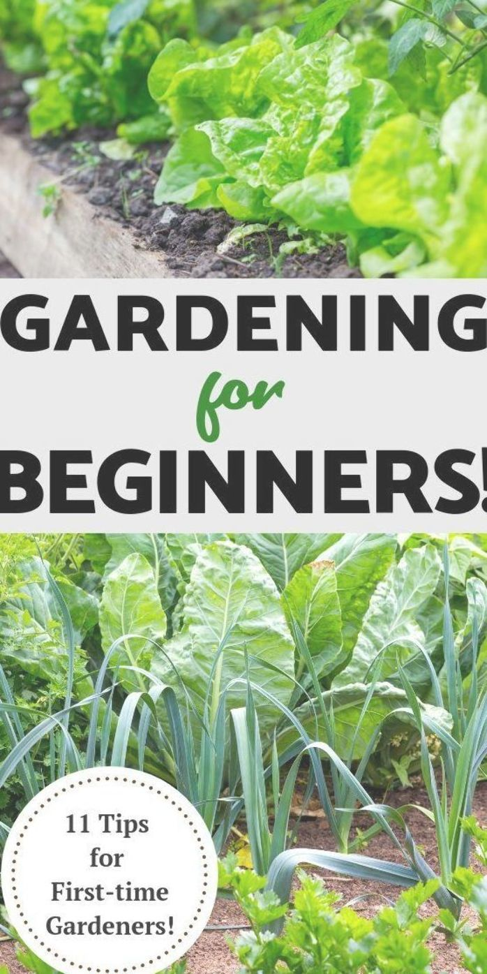 Vegetable Gardening For Beginners Do You Want To Plant Your First