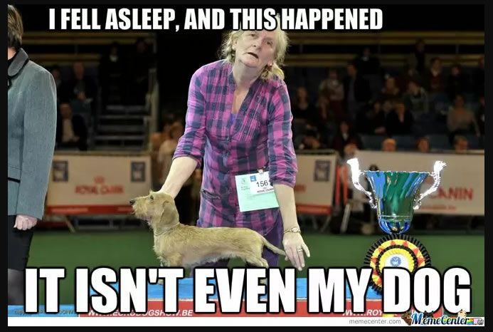Pin On Dog Show Memes