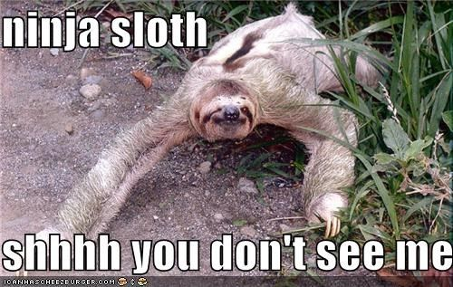Funny Sloth Pictures with Captions | ninja sloth shhhh you don't see me - Cheezburger