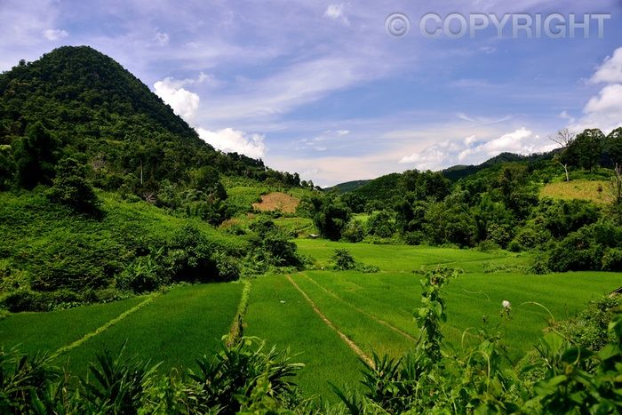 Namtha Fields - Luang Namtha