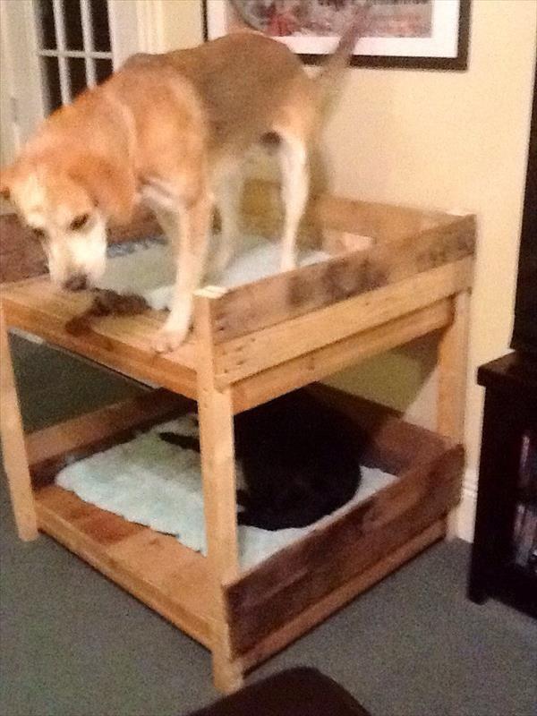 Lits superposés pour chiens à base de palettes! 3