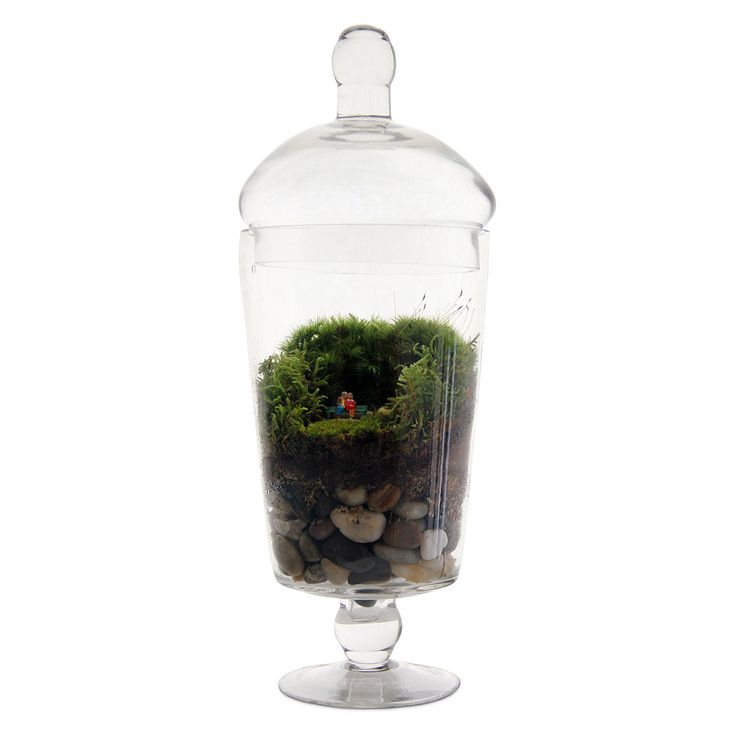 GROW OLD WITH YOU TERRARIUM.....what a unique gift idea for a anniversary,wedding or valentines day!