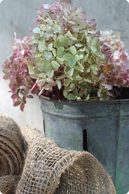 put it in a bucket hortensias pinterest fleurs. Black Bedroom Furniture Sets. Home Design Ideas