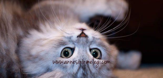 Kediler hakkında ilginç bilgiler