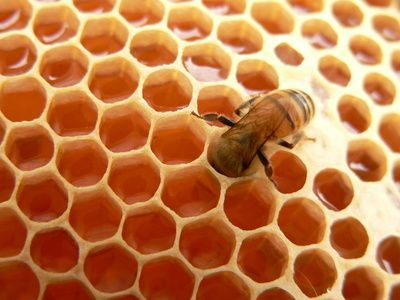 Getting started in beekeeping? Here is a beginner's guide to raising bees in your backyard from The Old Farmer's Almanac.