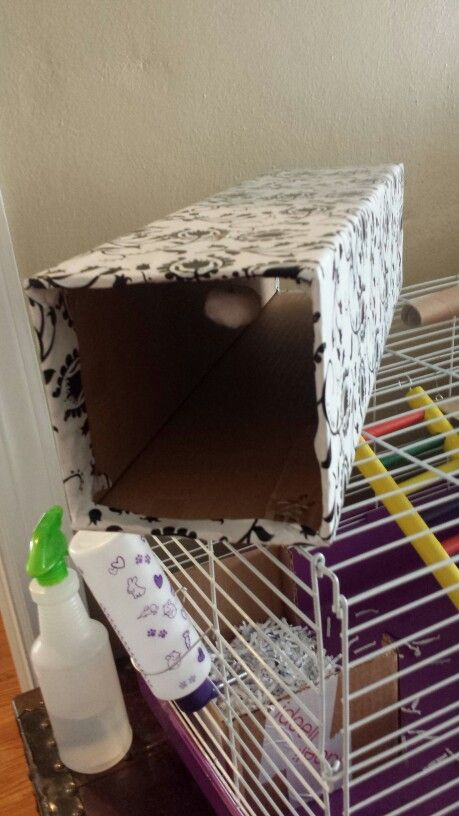 Diy play tunnel for my holland lop bunny made from a mini christmas tree box. Covered in decorative wrapping paper and fastened a cotton ball to play with.