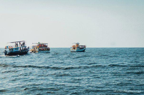 #киты #мирисса #туры #экскурсии #путешествия #животные #природа #шриланка #цейлон #whales #tours #srilanka #ceylon #nature #animals #travel