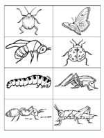 ~ Pre-K  Preschool theme ideas for learning about bugs: insects and spiders