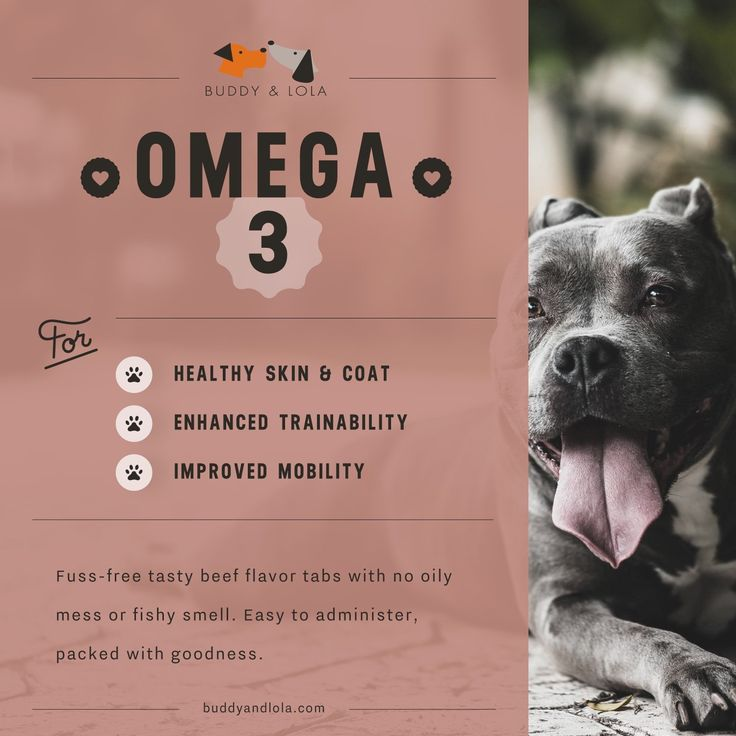 Amazon.com : Omega 3 For Dogs by Buddy & Lola - Pet Fish Oil Supplement 60 Tablets - Natural Ingredients with DHA & EPA - Odor and Burp Free - Healthy Coat, Skin and Itch Relief for Dogs : Pet Supplies
