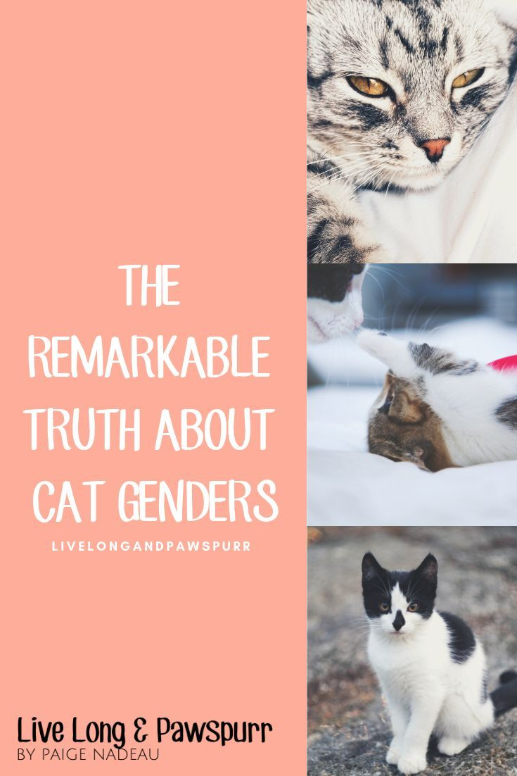 Which Cat Gender Is Actually Best Cats Cat Training Cat Advice