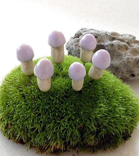 Hey look! Regretsy! I found something for you. This does NOT really look like a fairy ring. Or. Er.... Does it?: Mushrooms Toadstool, Epic Mushrooms, Favorite Plants, Fairy Ring, Fairies Rings, Whimsicl Fμçжèrÿ, Ummmm Epic, Regretsi Laughing, Mushrooms Fails