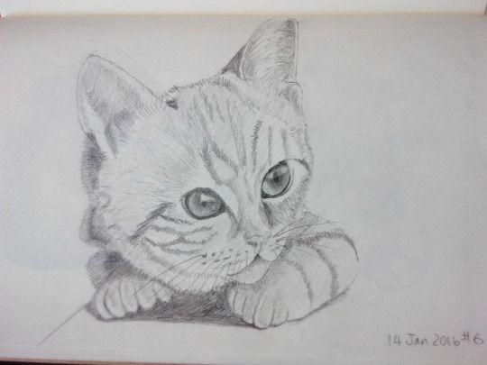 Cat sketching practice #006