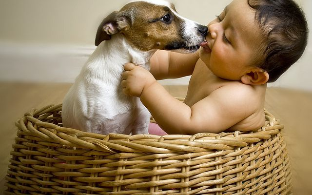 favorire il crearsi di un'amicizia tra cani e bambini #cani #bambini #addestrare #genitori