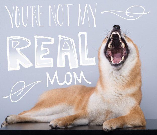 When she throws a brief, false temper tantrum. | 21 Times Zelda The Shiba Deeply Understood You