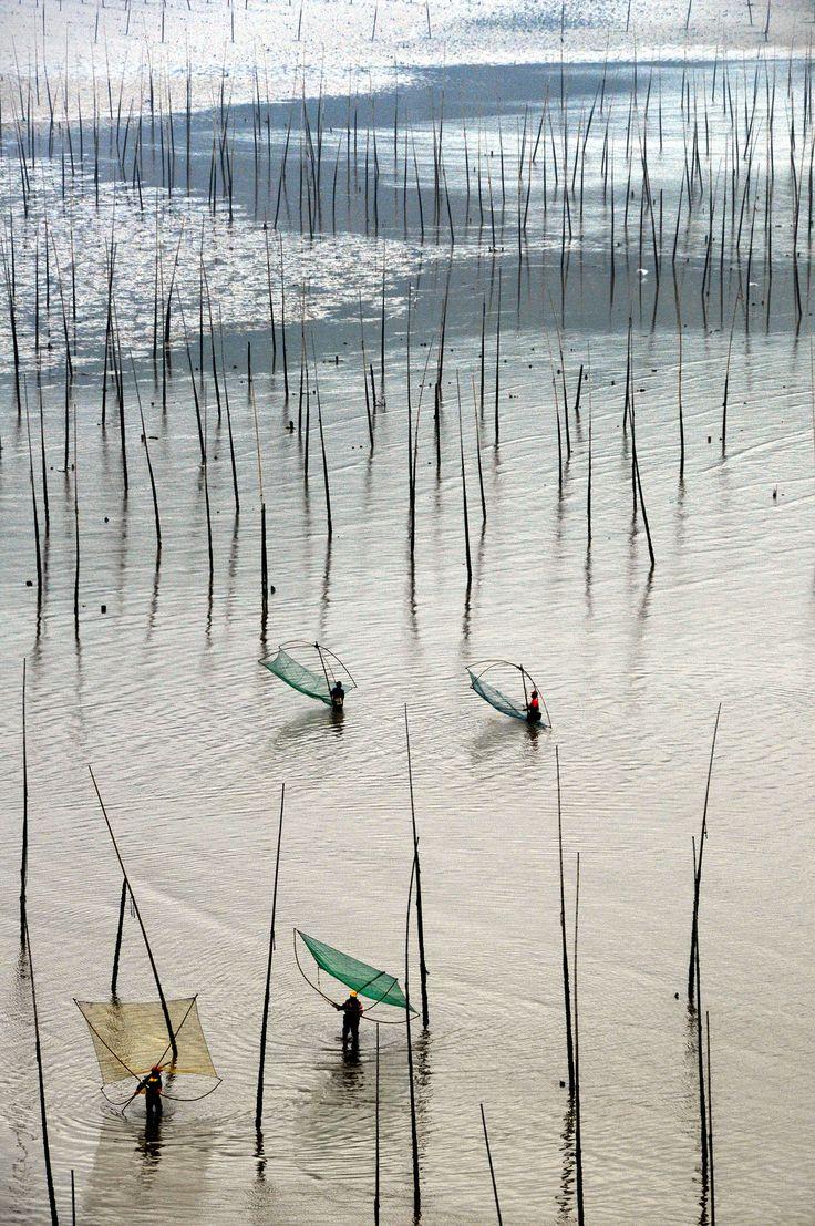Mudflats with bamboo sticks, Xiapu, Fujian, China 褔建 霞浦 北歧