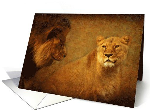 "Lions still love at first sight - wild cats blank note card (1098452) - by Steppeland. Blank inside - Great to use as a Valentine's Day card and to add your personalised (Valentine's ) verse: ""I will always love you..."" Price: $3.50 (includes envelope) - Check discounts!!"